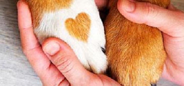 cane-cuore