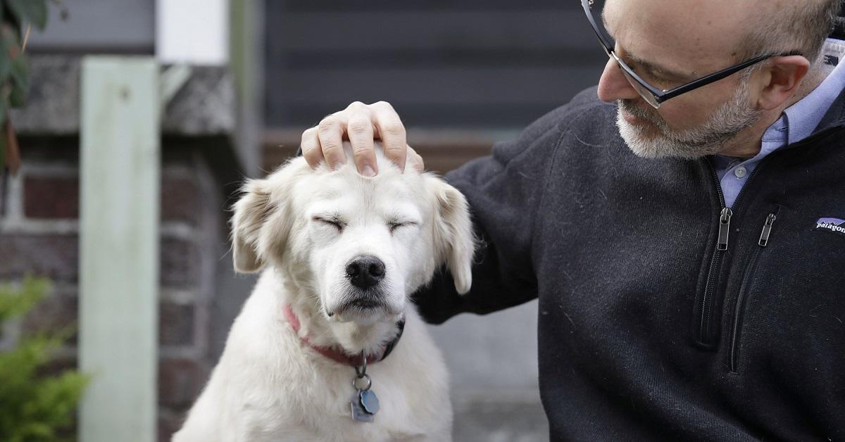 Cosa sapere sul tuo cane di 11 anni: attenzioni, cure e necessità
