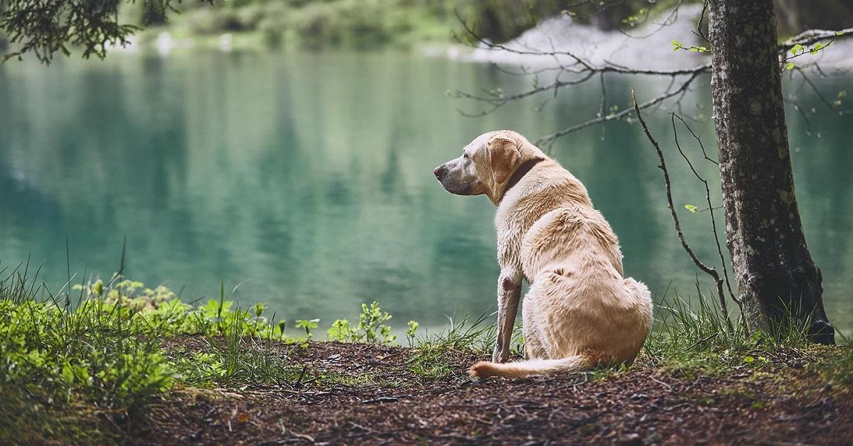 Cosa sapere sul tuo cane di 12 anni: tutte le cure, i dettagli, le attenzioni
