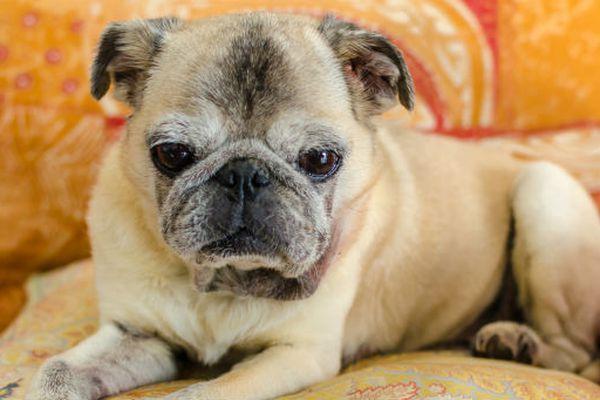 Cosa sapere sul tuo cane di 14 anni: cure, attenzioni e dettagli