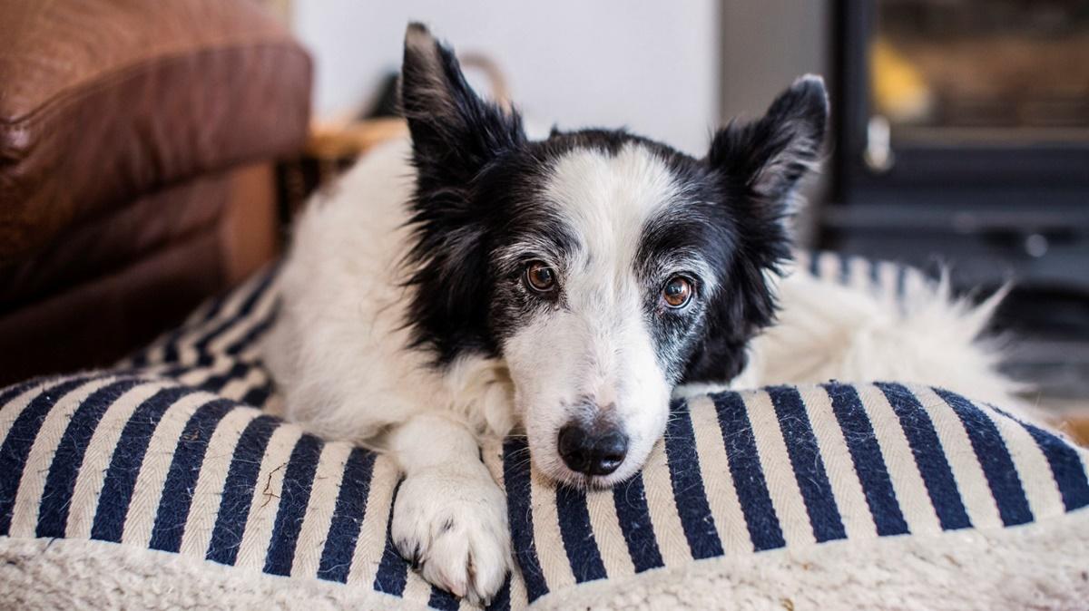 cuccia per cani anziani