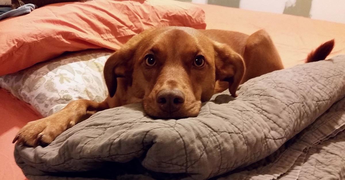 Cosa sapere sul tuo cane di 3 anni: necessità, bisogni, cure