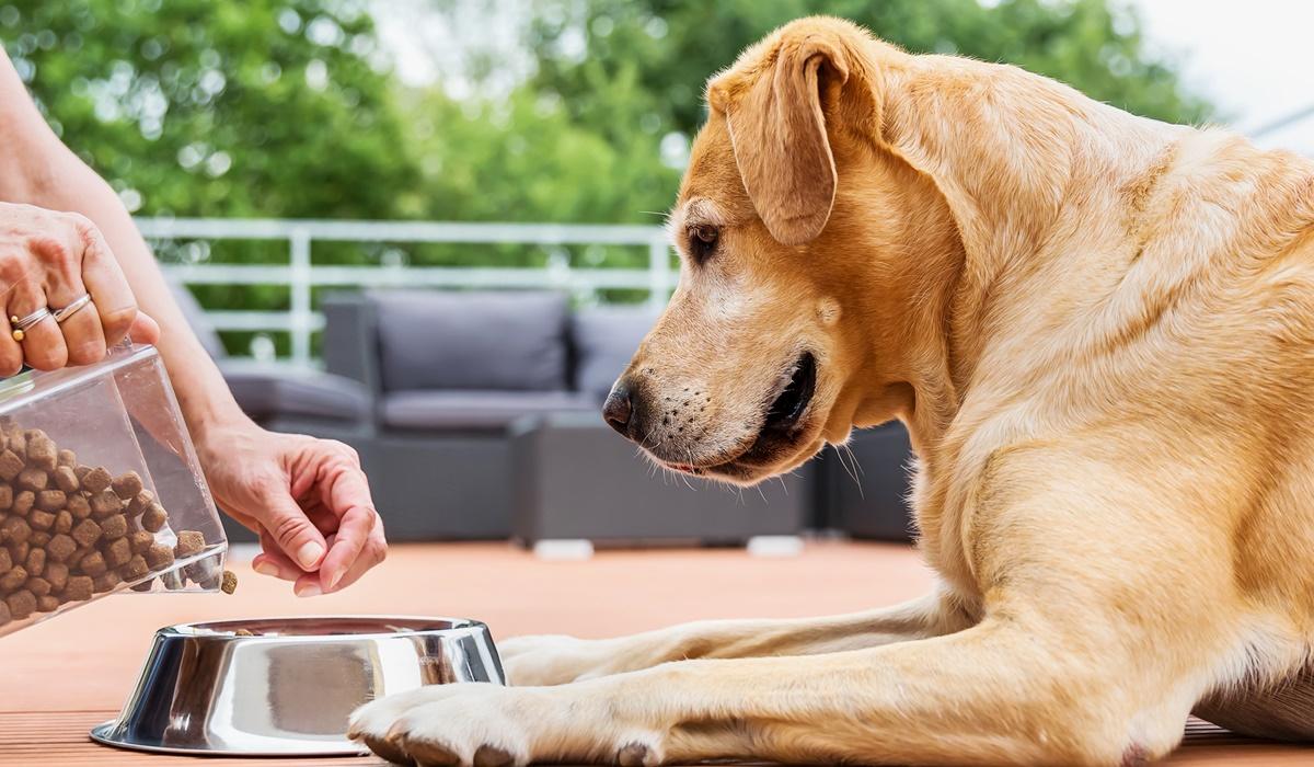 alimentazione di un cane di taglia grande