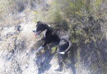 cane-in-pericolo-di-vita-viene-trasportato-dal-veterinario-da-3-ciclisti