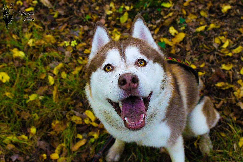 I cani possono mangiare il sanguinaccio?
