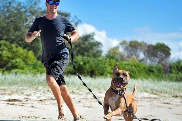 cane felice in spiaggia