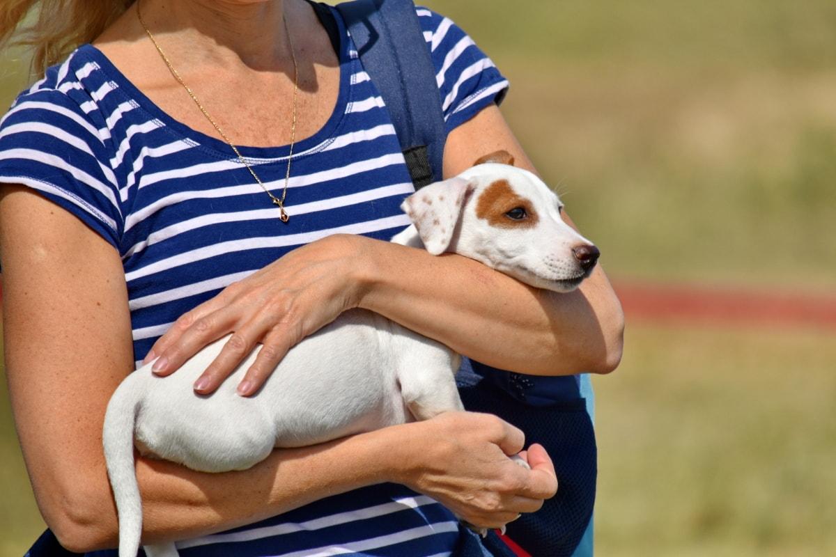 10 motivi per cui il cane ti segue sempre e ovunque