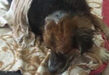 cane-viene-sepolto-vivo-perche-ripudiato-dalla-sua-stessa-famiglia