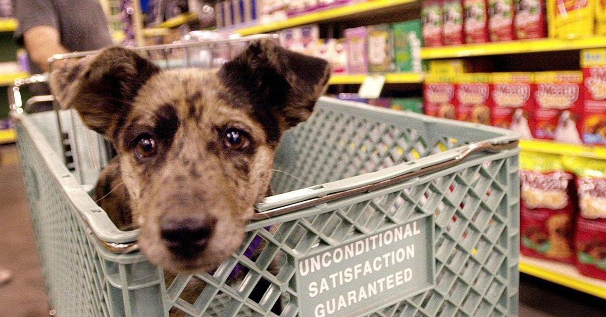 cane nel carrello della spesa