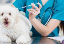 118 veterinario per cani