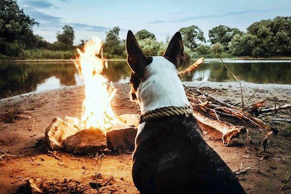 cane davanti al fuoco