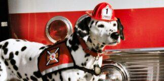 cane vigile del fuoco