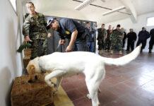 cane e addestratori