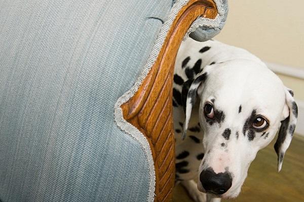 cane dietro divano