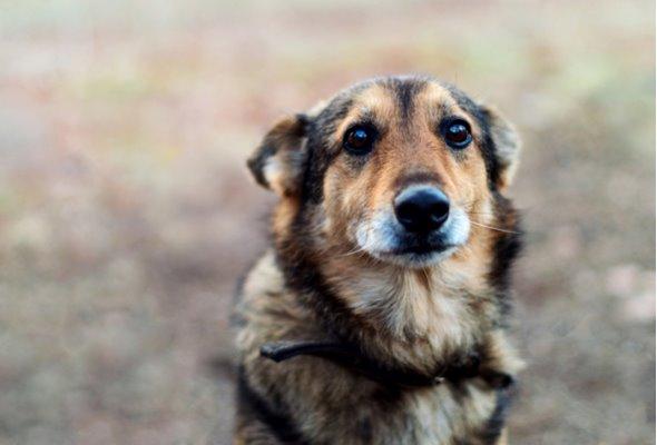 espressione triste del cane