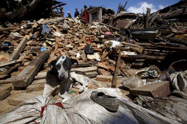cane sul luogo di un terremoto