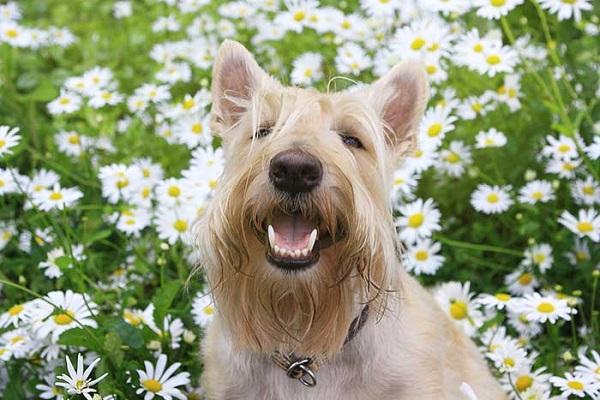 cane nel prato fiorito