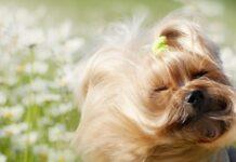 cane in un prato di margherite