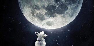 cane che guarda la luna piena