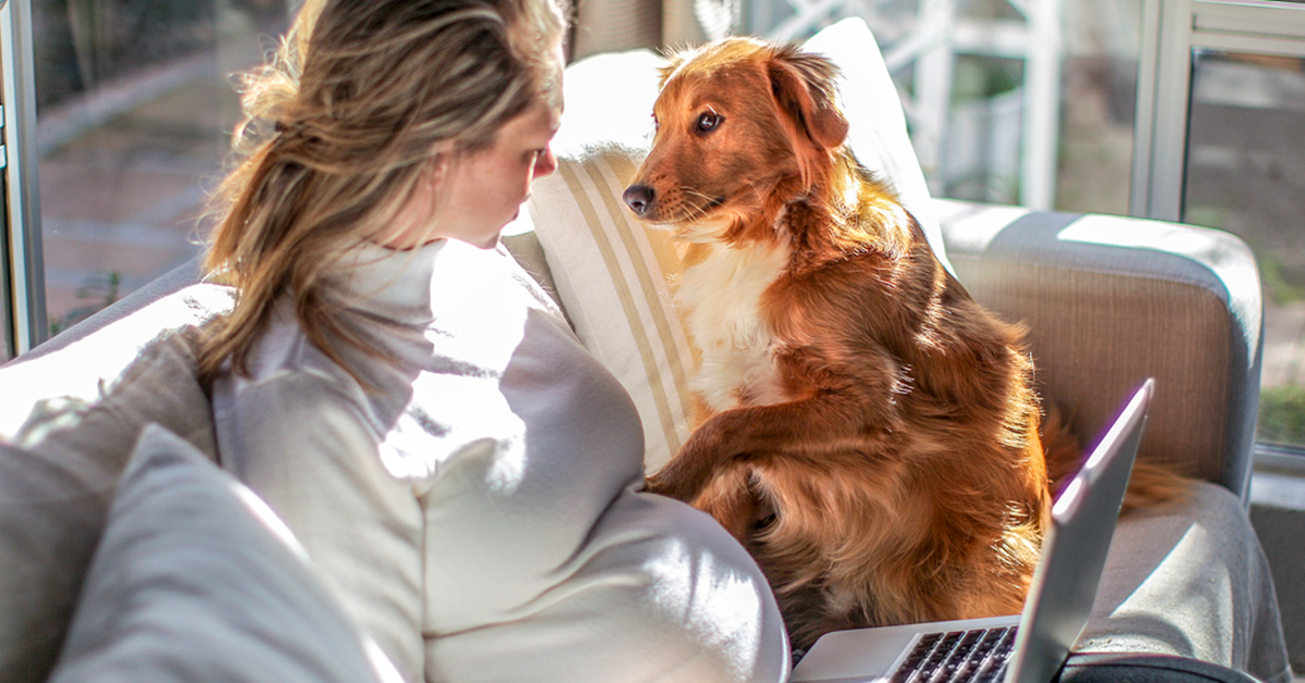 Non vorrete più un cane in casa una volta aver visto queste 15 foto!