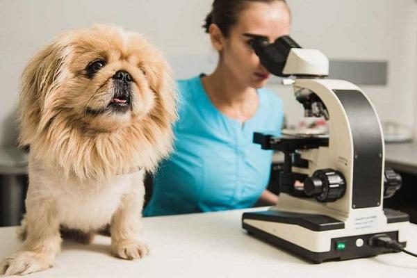 donna al microscopio e cane su tavolo