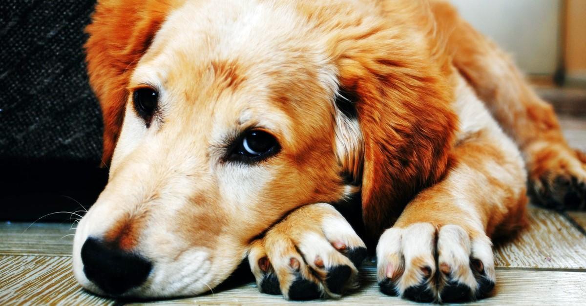 I cani possono mangiare gli struffoli?