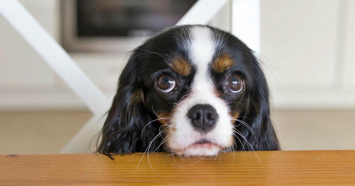 cane che elemosina cibo