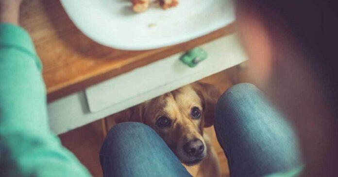 cane sotto il tavolo