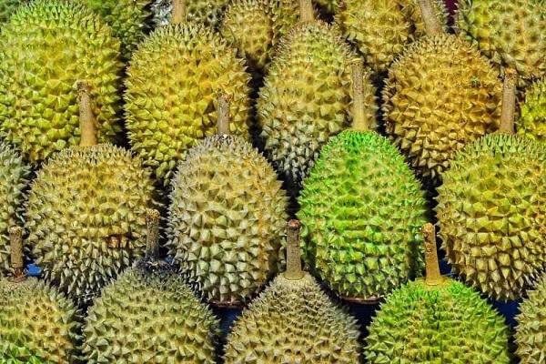 frutti di durio per il cane