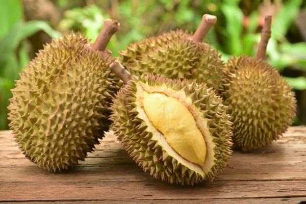 frutto di durio per cani