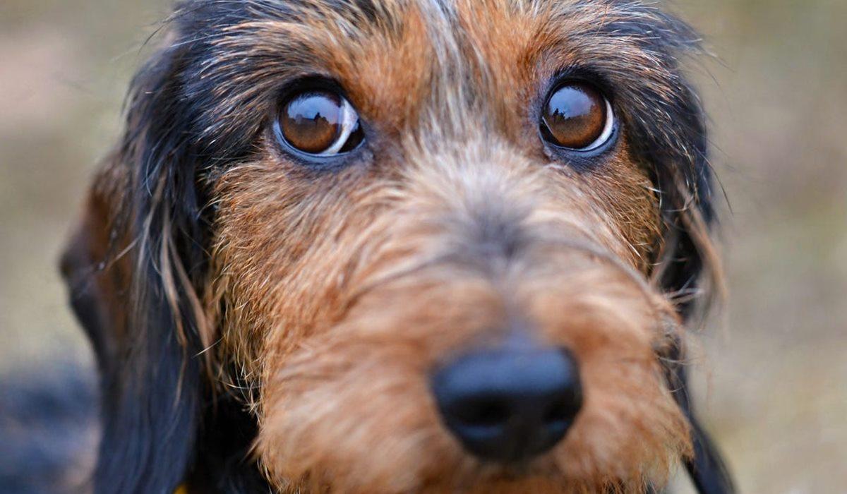 I cani possono mangiare il lardo?