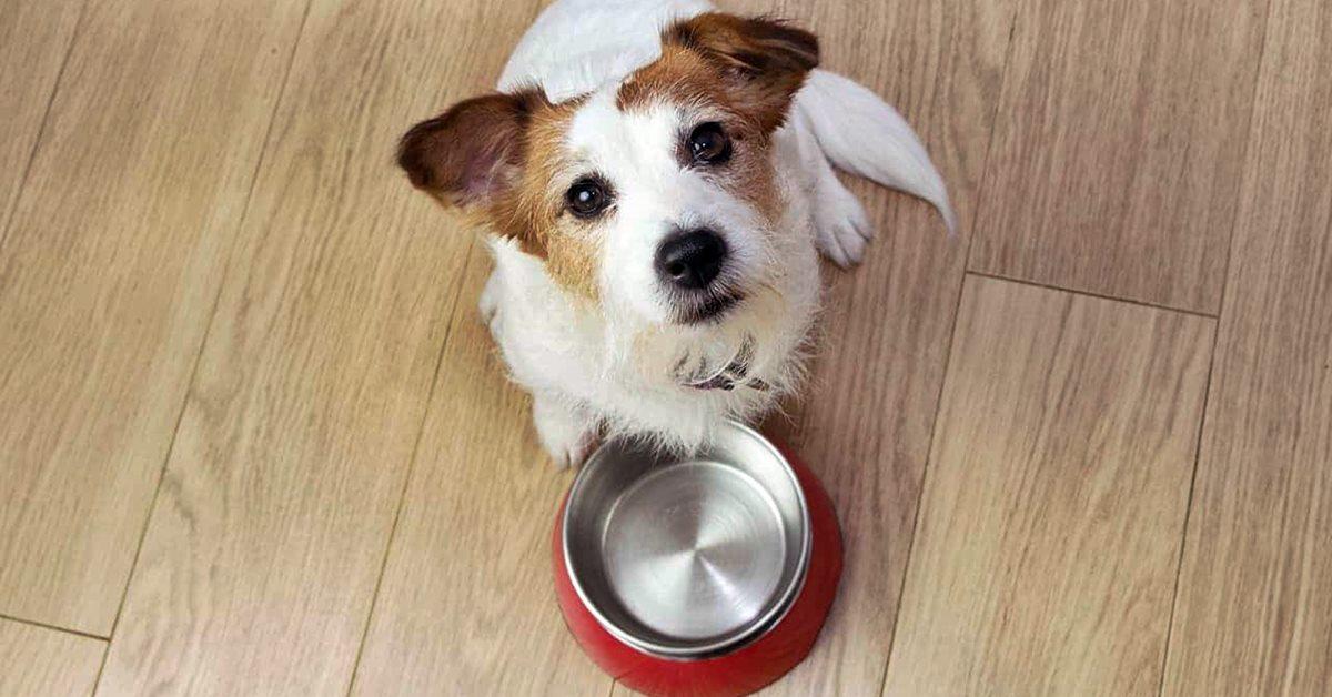 cane ha fame