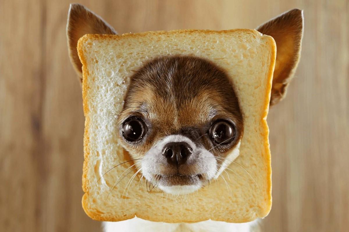 I cani possono mangiare il pastin?