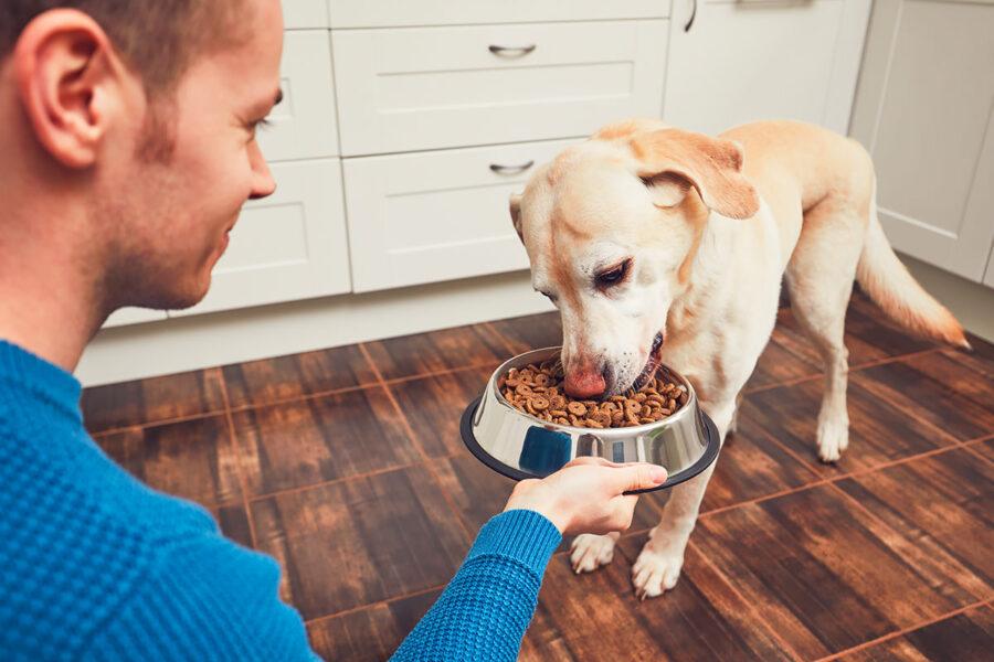 cane mangia croccantini
