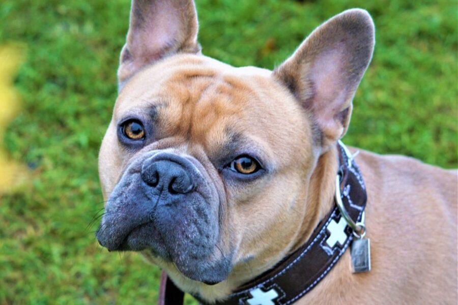 cane con lo sguardo dolce