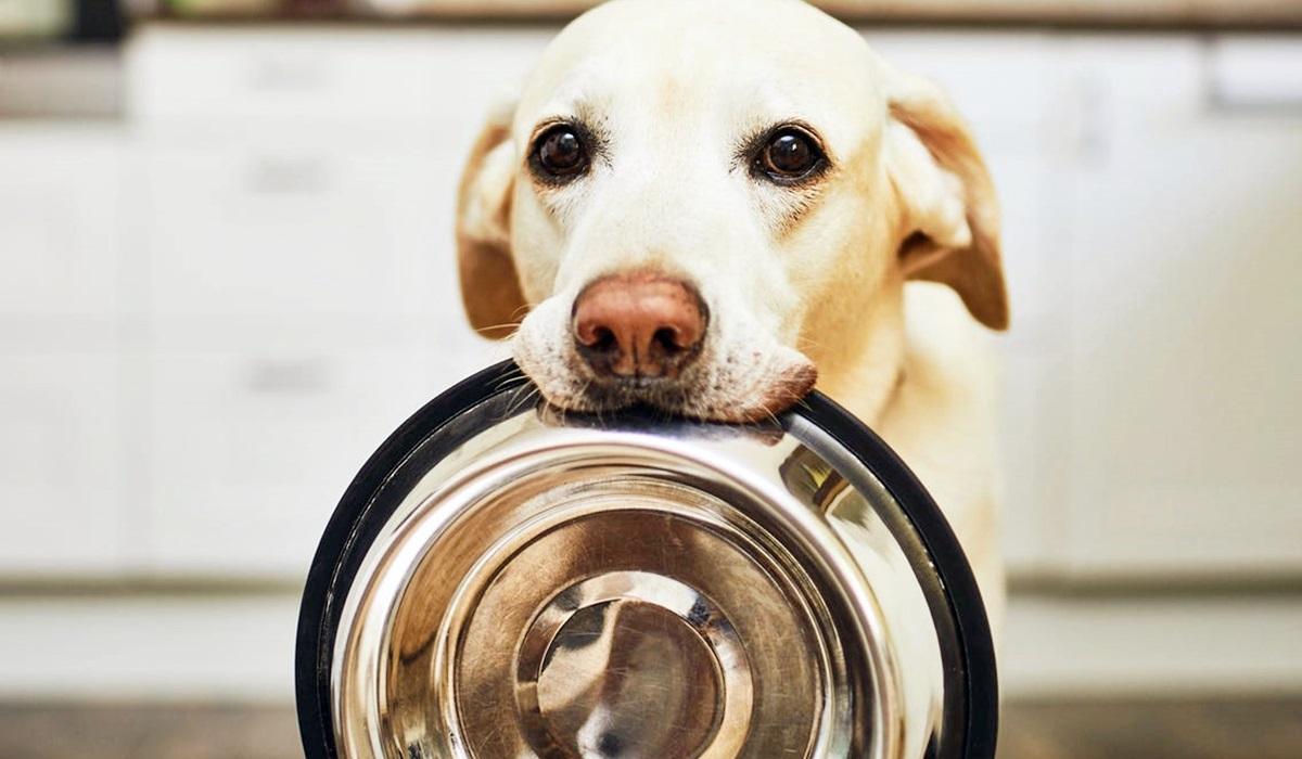 I cani possono mangiare la cernia?