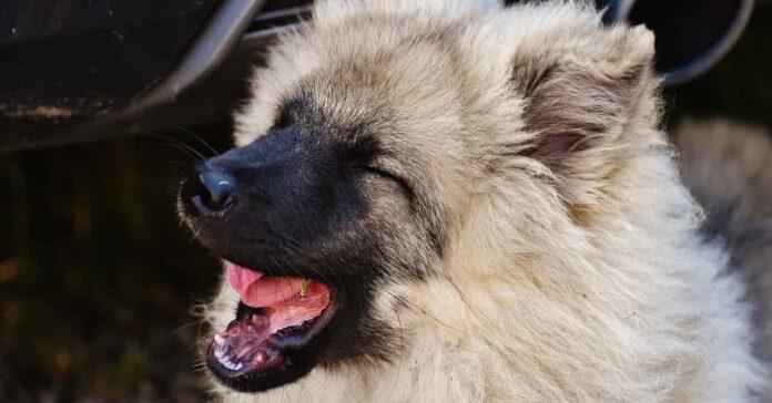 cane che starnutisce spesso