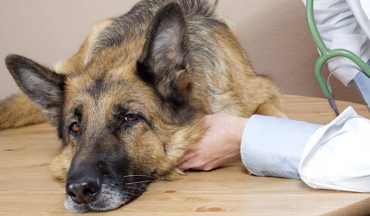 I cani possono mangiare la soppressata?