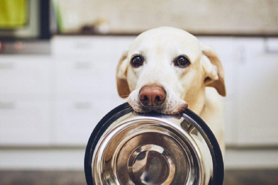 cane che aspetta di mangiare
