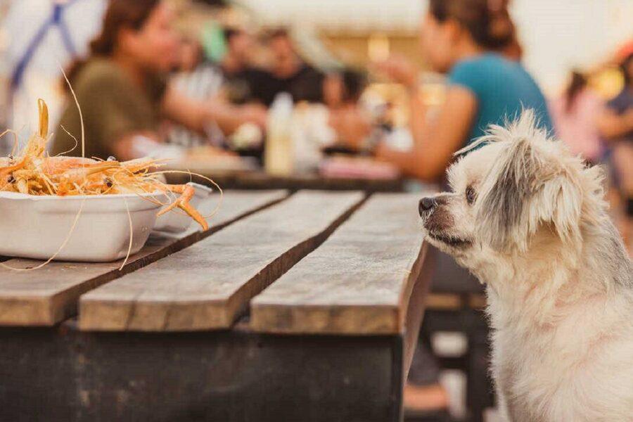 cane goloso di crostacei