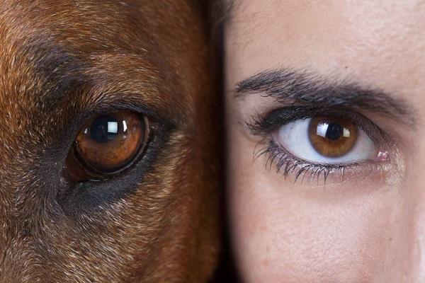 mezza faccia di cane e mezza di ragazza