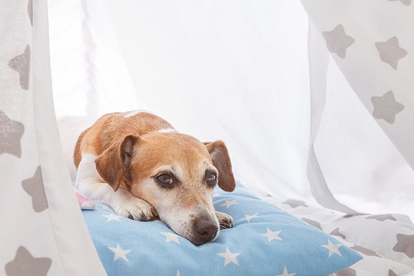 cane che si riposa