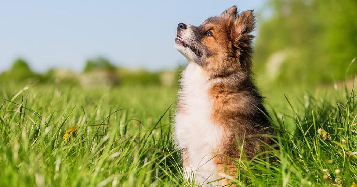 cane guarda in cielo