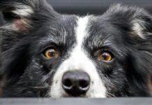 cane spaventato che si nasconde