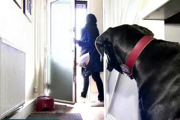 cane triste perché la padrona va via