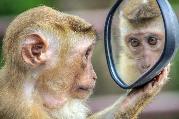 scimmia che si guarda allo specchio