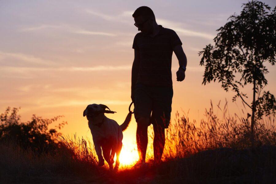 passeggiata del cane al tramonto