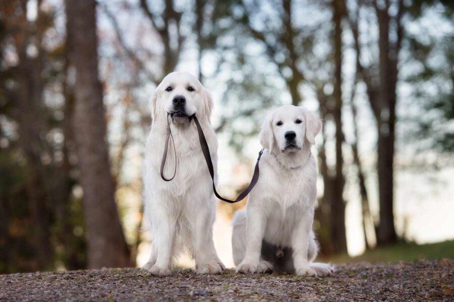 cane tiene il guinzaglio di un altro cane