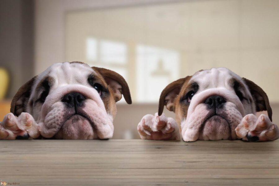 cani poggiati sul tavolo