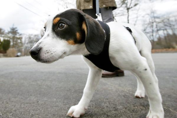 cane insegue l'odore della pipì